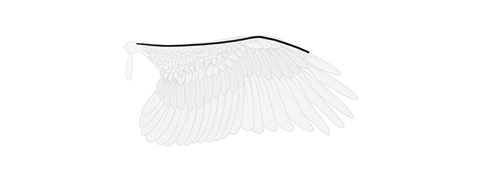 how-to-draw-wings-wing-step-by-step-1