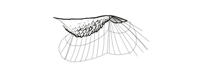 how-to-draw-wings-wing-step-by-step-12