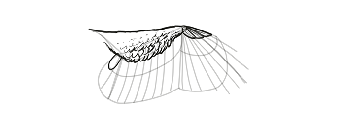 how-to-draw-wings-wing-step-by-step-13