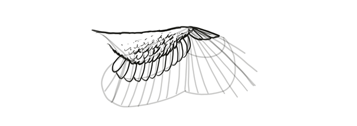 how-to-draw-wings-wing-step-by-step-16
