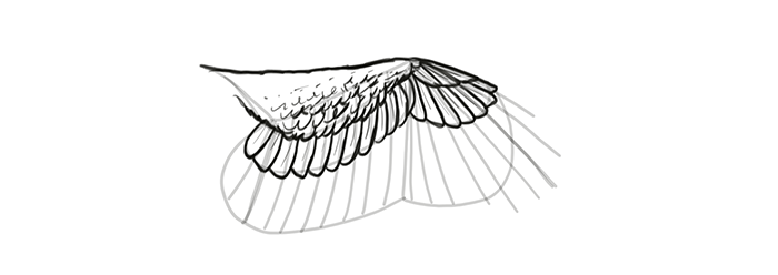 how-to-draw-wings-wing-step-by-step-17