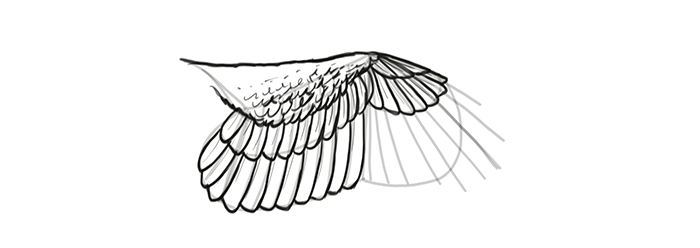 how-to-draw-wings-wing-step-by-step-18