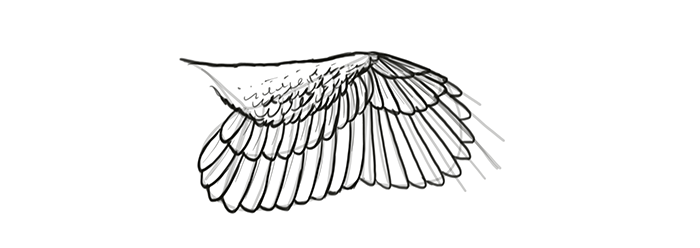 how-to-draw-wings-wing-step-by-step-19