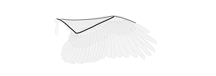 how-to-draw-wings-wing-step-by-step-2