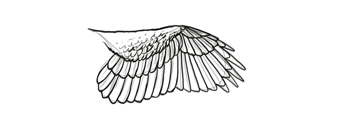 how-to-draw-wings-wing-step-by-step-20