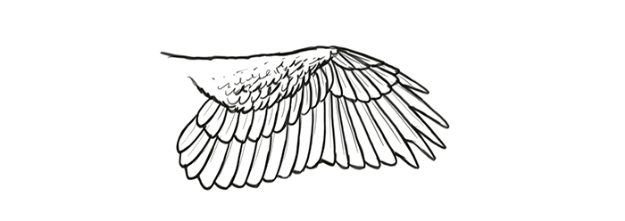 how-to-draw-wings-wing-step-by-step-21