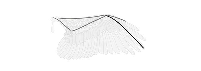 how-to-draw-wings-wing-step-by-step-3