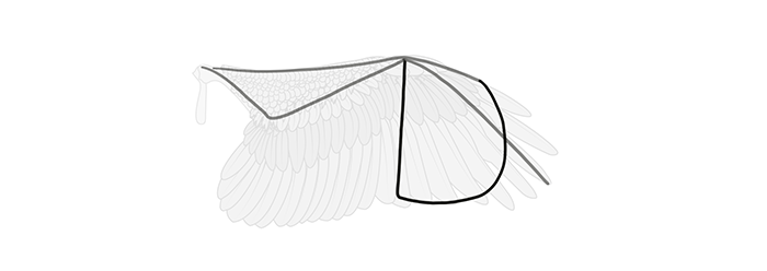 how-to-draw-wings-wing-step-by-step-4