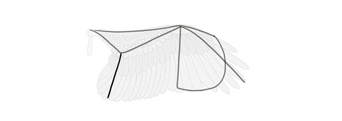how-to-draw-wings-wing-step-by-step-5