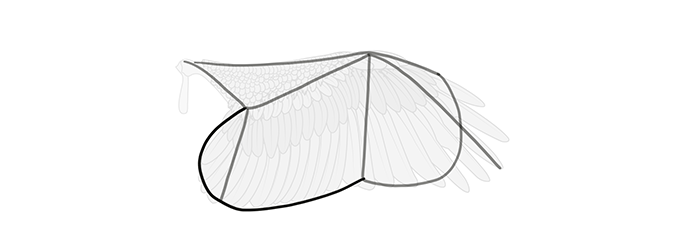 how-to-draw-wings-wing-step-by-step-6
