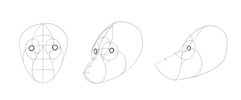 how-to-draw-wolves-drawing-head-10