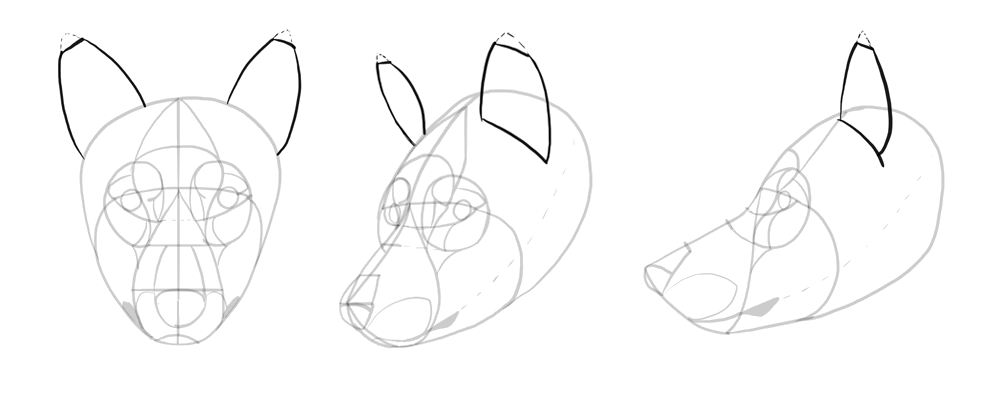 how-to-draw-wolves-drawing-head-13