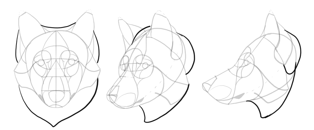 how-to-draw-wolves-drawing-head-17