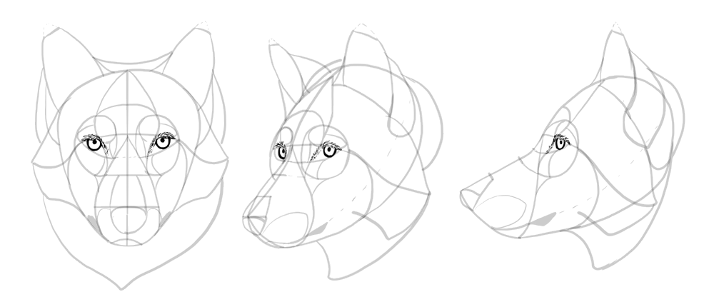how-to-draw-wolves-drawing-head-18
