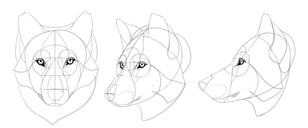 how-to-draw-wolves-drawing-head-19