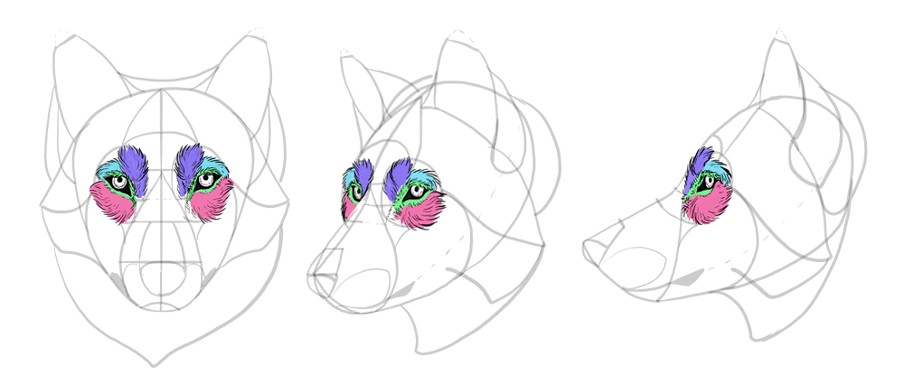 how-to-draw-wolves-drawing-head-20