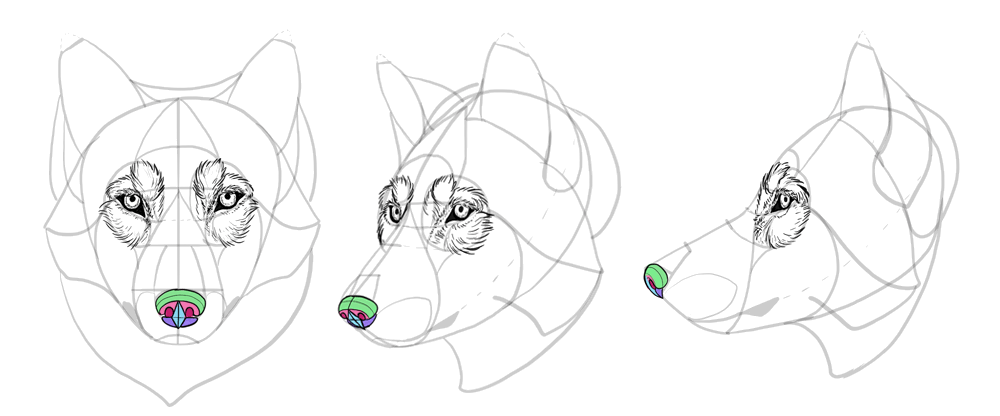 how-to-draw-wolves-drawing-head-21