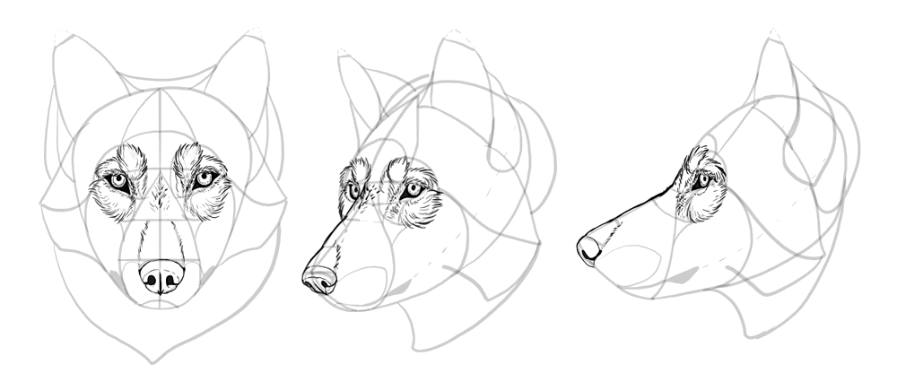 how-to-draw-wolves-drawing-head-22