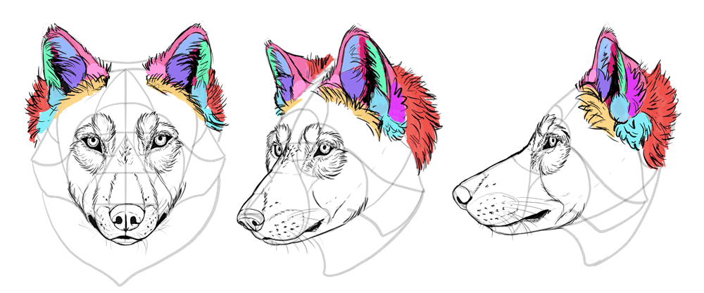 how-to-draw-wolves-drawing-head-24