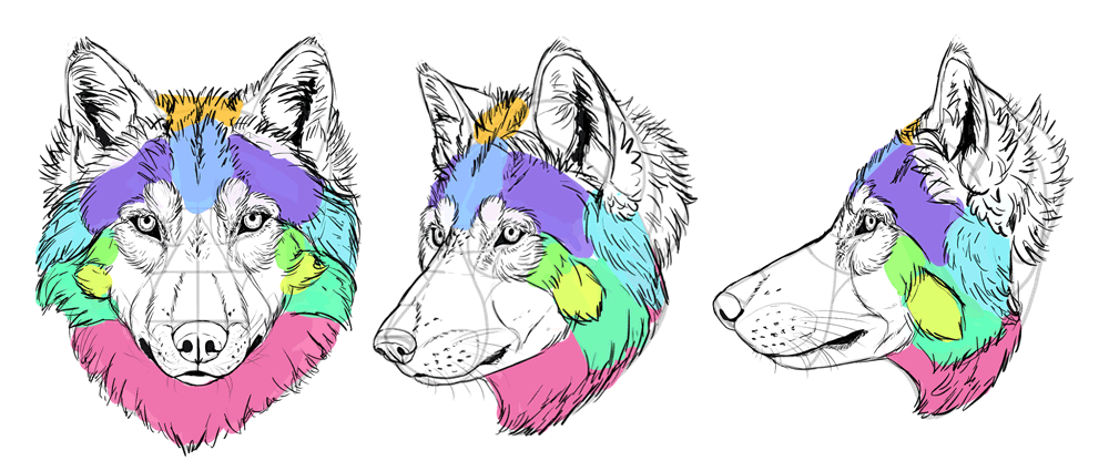 how-to-draw-wolves-drawing-head-25