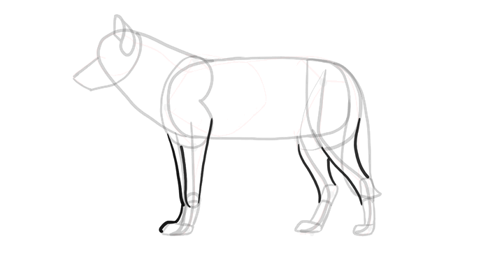 how-to-draw-wolves-drawing-process-9