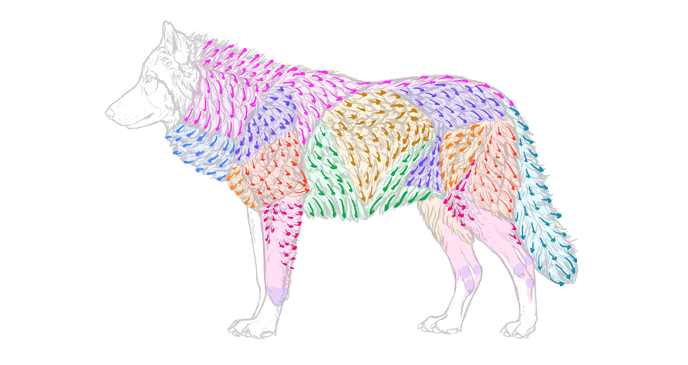 how-to-draw-wolves-fur-direction