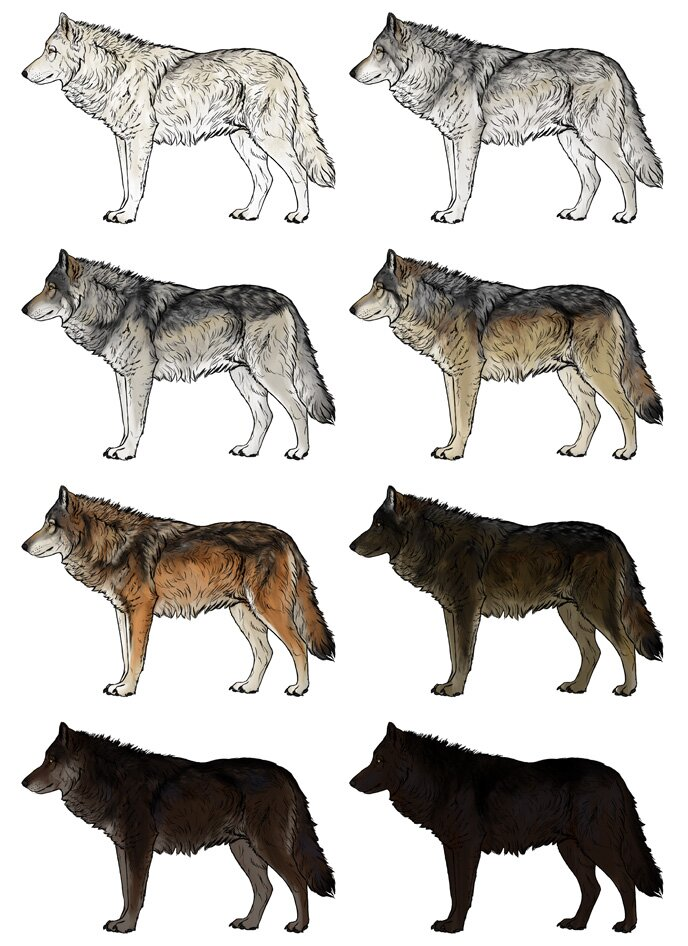 how-to-draw-wolves-wolf-colors