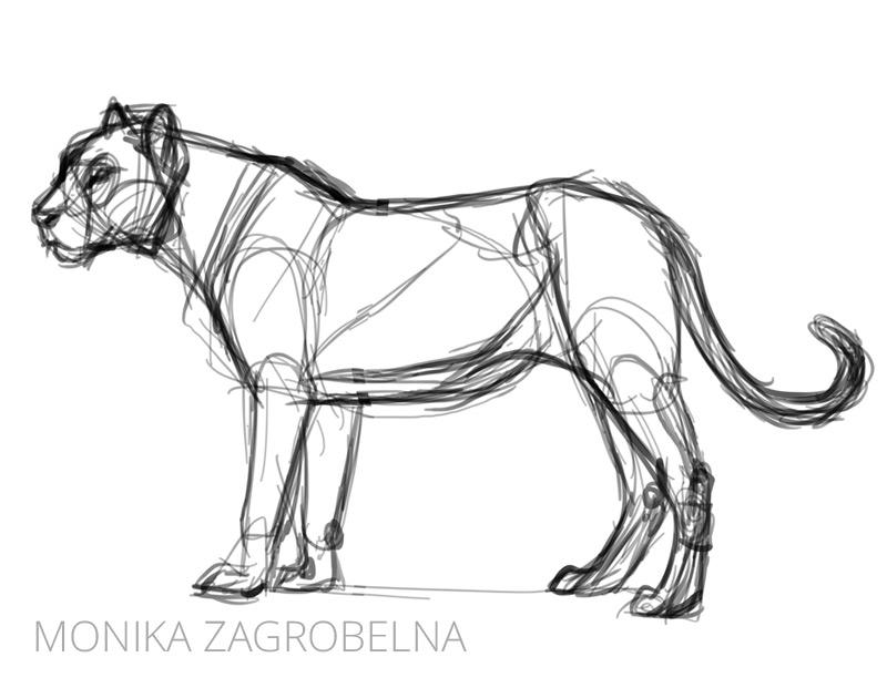 sketch of a big cat