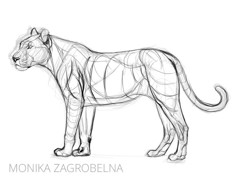 line art of a big cat