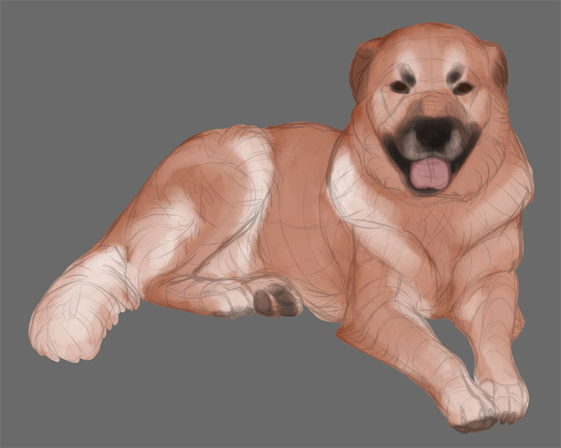 dog detailed colors
