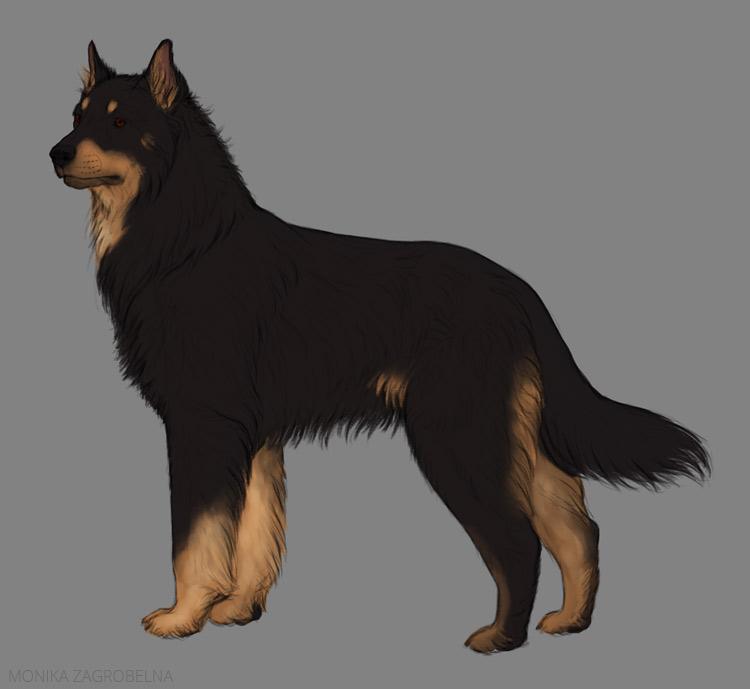 long fur colors