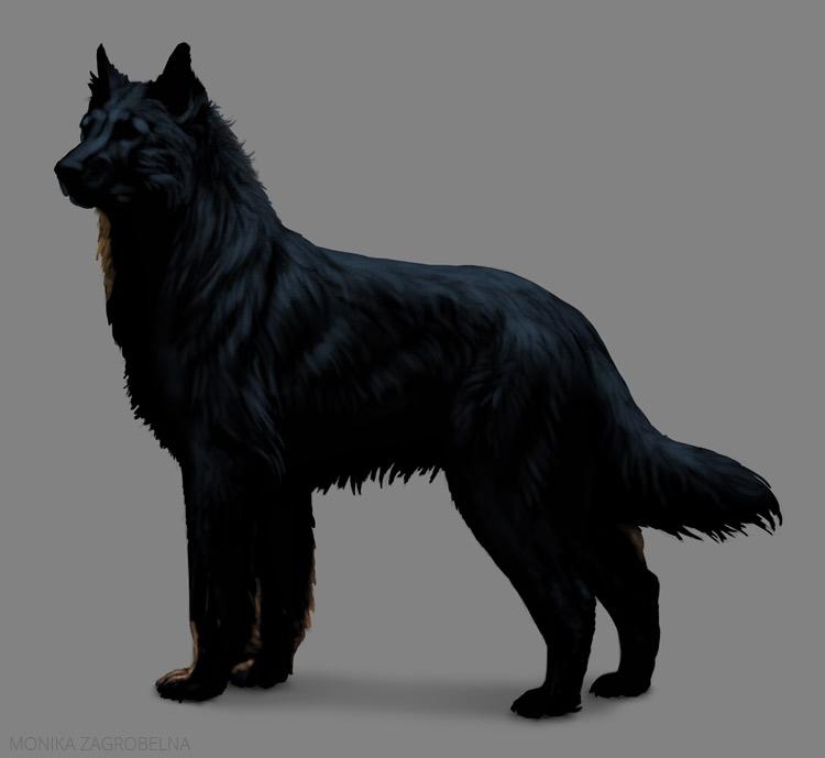 long fur shine