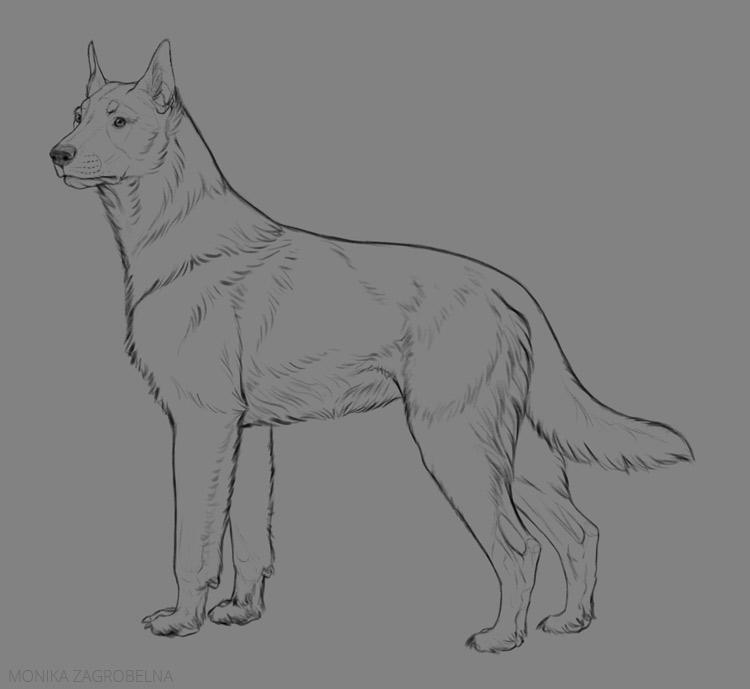 medium fur line art