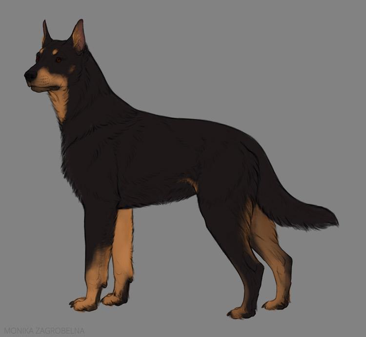 basic colors german shepherd