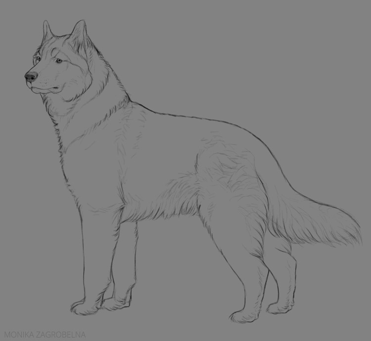 thick fur line art