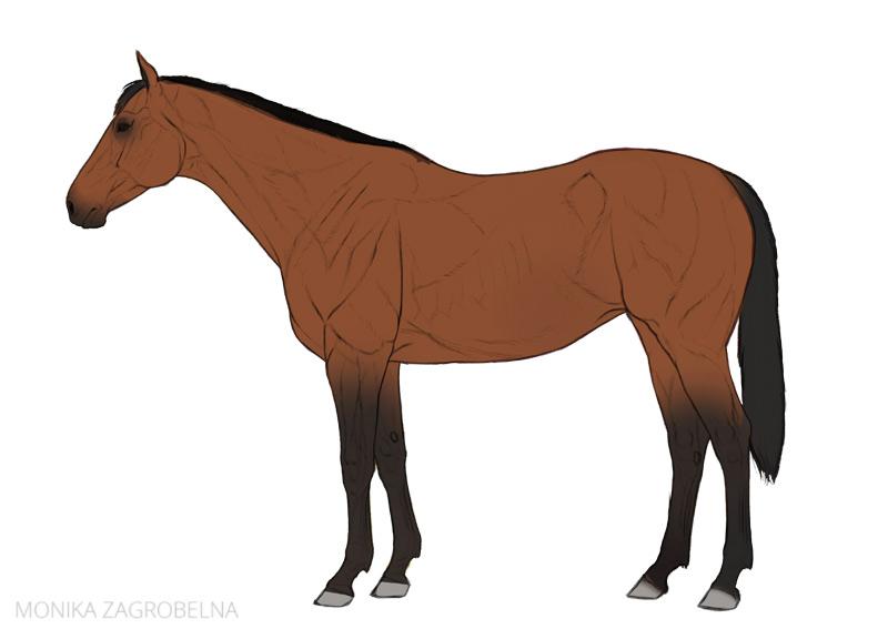 flat horse drawing