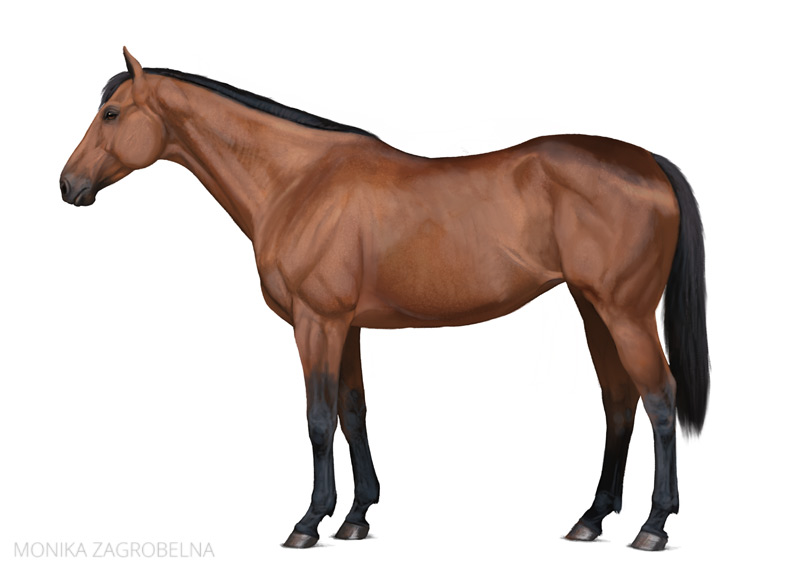 realistic horse digital painting
